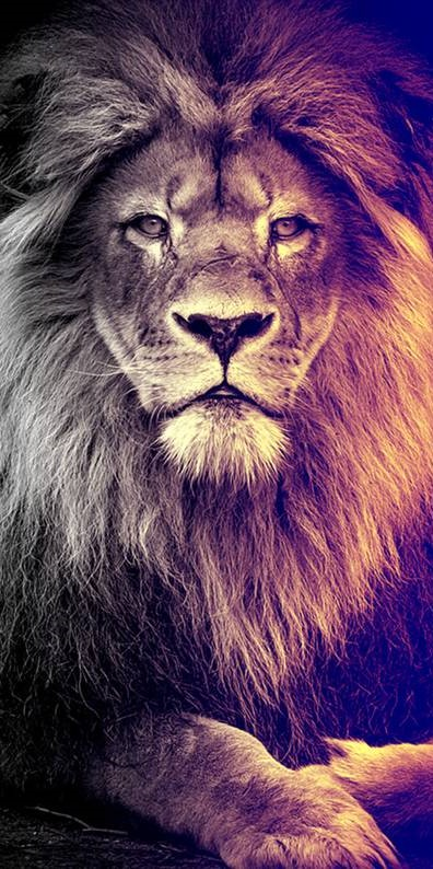 lion iphone 11 background