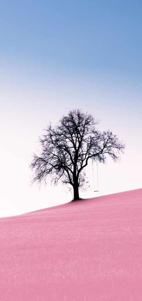tree iphone wallpapers
